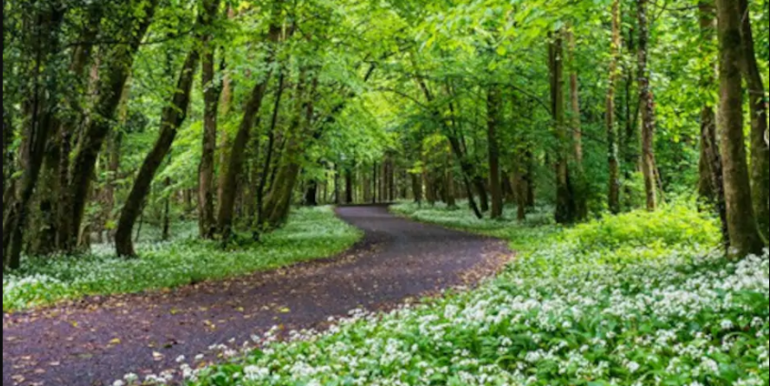 Renville woods